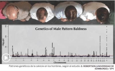 genes que provocan la calvicie