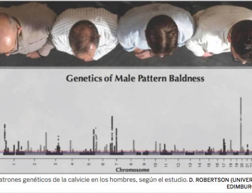 Descubiertos los 287 genes que provocan la calvicie